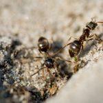 Formigas: cooperação e trabalho em equipe que nos inspiram