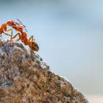 O mundo das formigas